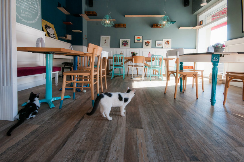 romeow cat bistro bar design ideas